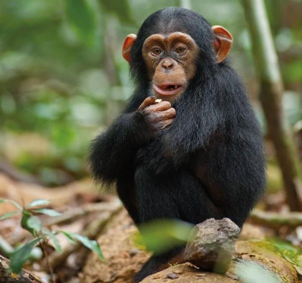 image de singe - Image De